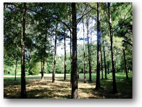 12.8 Acres In Rankin County In Pela : Pelahatchie : Rankin County : Mississippi