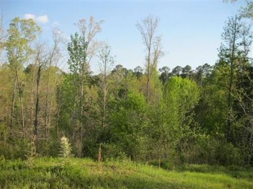 Big Buck Country Land For Sale : Woodville : Wilkinson County : Mississippi