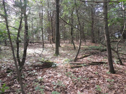 Beautiful Wooded Building Site : Wisconsin Dells : Adams County : Wisconsin
