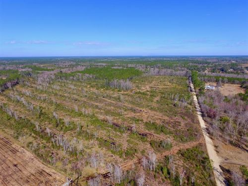 42 Acres With Great Potential : Hortense : Brantley County : Georgia