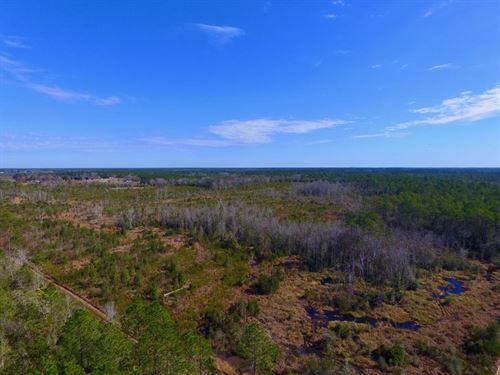 82 Acres Huntsmen/Investors : Hortense : Wayne County : Georgia