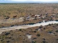 160 Acre Blm Mecca : Herlong : Lassen County : California