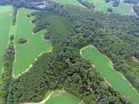 Beautiful Farm & Timber Blakely Ga : Blakely : Early County : Georgia