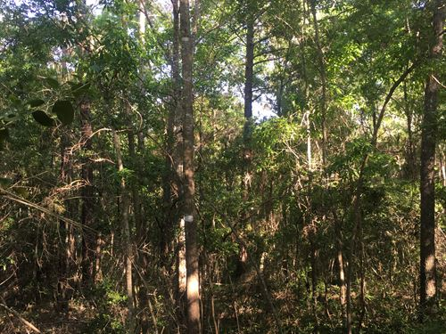 35 +/- Acres Huckleberry Drive : Andalusia : Covington County : Alabama