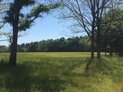 20 +/- Acres North Creek Rd : Florala : Covington County : Alabama