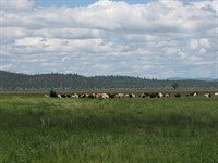 338+ Acre Langell Valley Ranch : Bonanza : Klamath County : Oregon