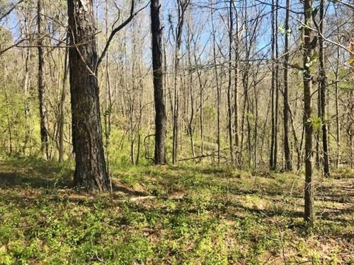 100 Acres Timber And Hunting Land : Cranfield : Adams County : Mississippi