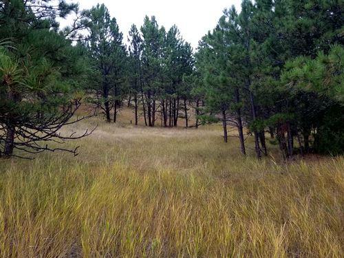 Lone Elk Ranchette : Hot Springs : Custer County : South Dakota