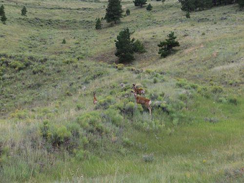 Hercules Lode : Westcliffe : Custer County : Colorado