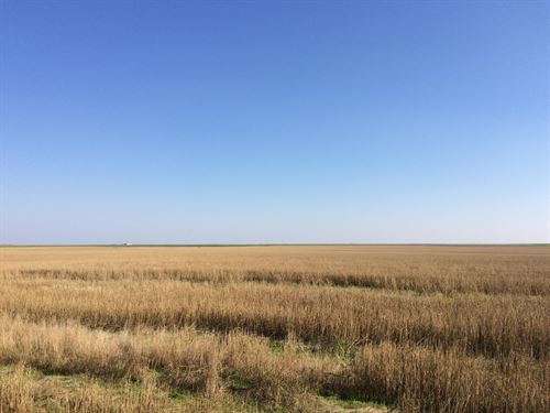 Little Beaver Creek Upland Quarter : Bird City : Cheyenne County : Kansas