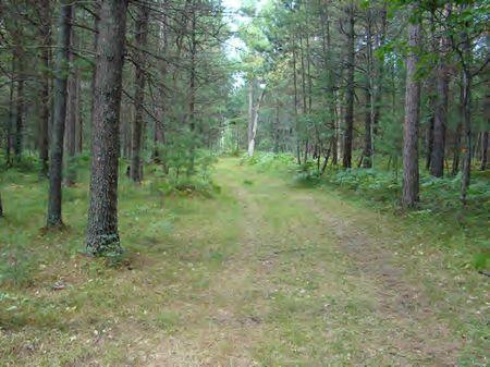 Roscommon Big Buck Oasis : Roscommon : Michigan