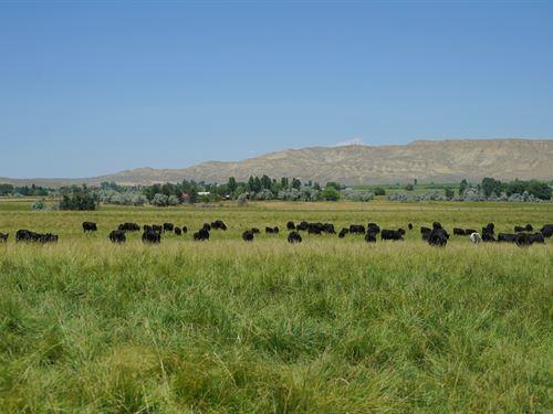 Tweed Lane 40 : Lander : Fremont County : Wyoming