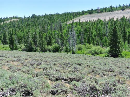 Limestone Lane Lot 31 : Lander : Fremont County : Wyoming