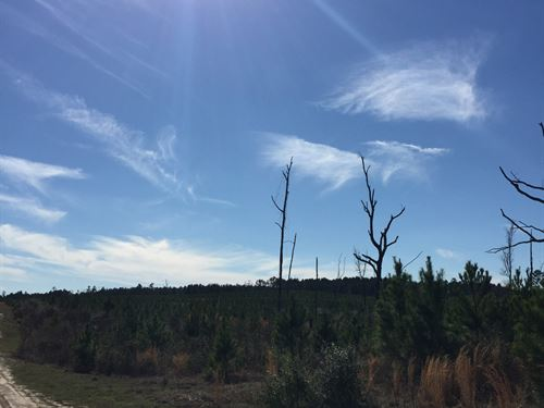 42 Ac Us 287 : Corrigan : Polk County : Texas