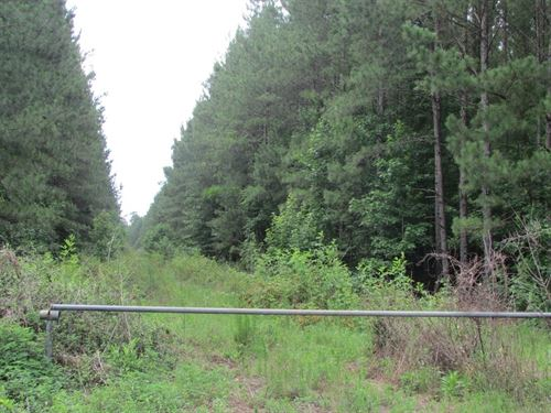 Porcher 2 Tract : Moncks Corner : Berkeley County : South Carolina