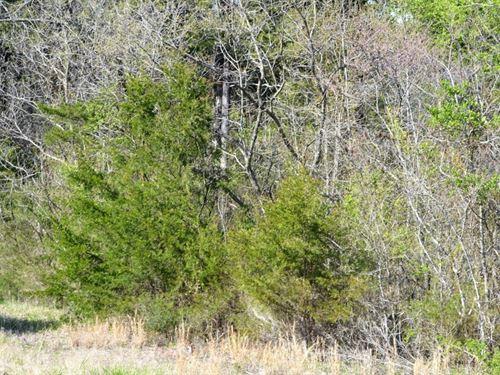 1.29 Acres In Peel, AR : Peel : Boone County : Arkansas