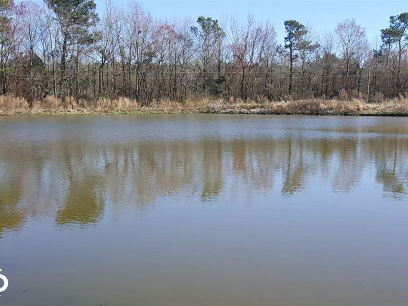 Piney Woods Road Land For Sale : Willard : Pender County : North Carolina