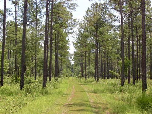 Superior Timber & Recreational Land : Leary : Calhoun County : Georgia