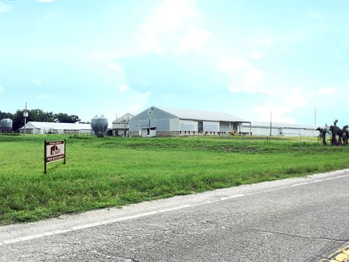 Land + Poultry Farm : Zephyrhills : Pasco County : Florida