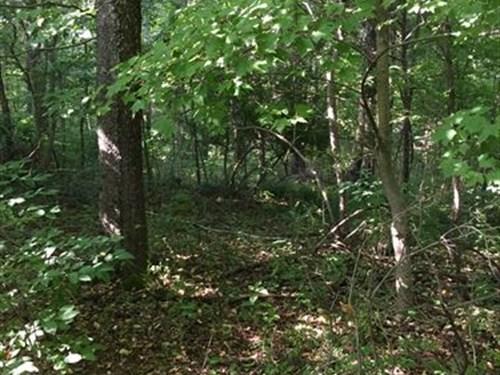 Beautiful Land Close To Lake : Somerset : Pulaski County : Kentucky
