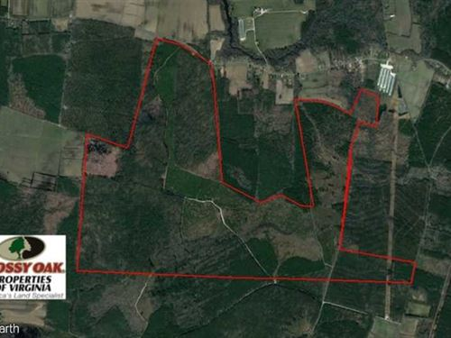 Under Contract, 761 Acres of Hunt : Hallwood : Accomack County : Virginia