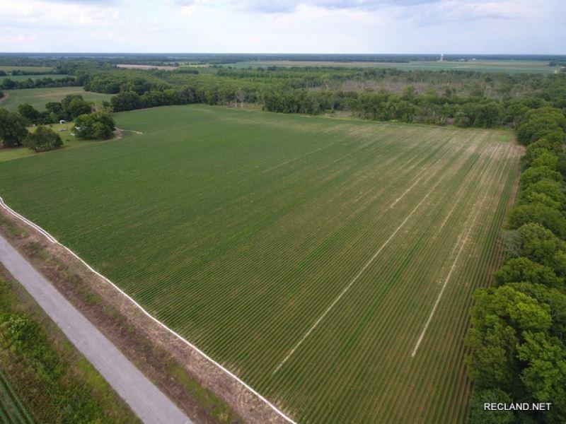 126 Ac, Farm Land & Hunting : Fort Necessity : Franklin Parish : Louisiana