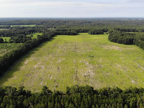 High Springs Farmland : High Springs : Alachua County : Florida