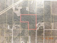 Secluded Land For Sale : Fountain : Calhoun County : Florida