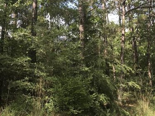 Great Timber Investment & Rec Tract : Shubuta : Wayne County : Mississippi