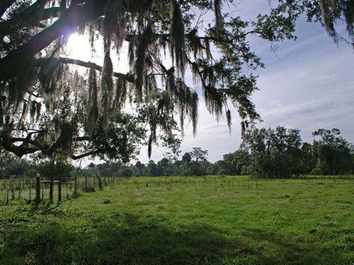 Lazy W Ranch In Felda, Florida : Felda : Hendry County : Florida
