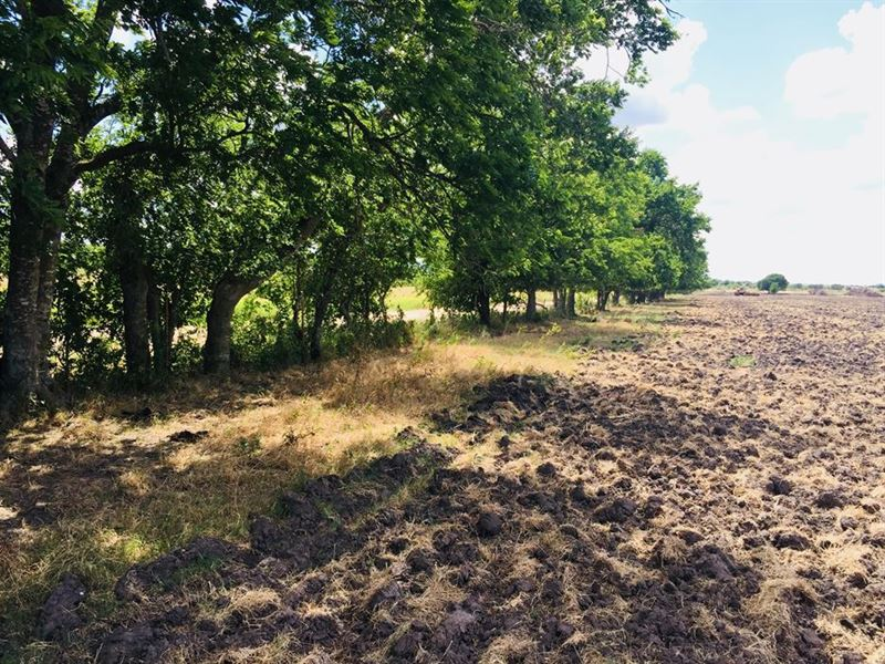 Nice 15 Acre Property : Rogers : Milam County : Texas