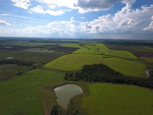 +/- 325 Acres, Cr 116 : Buckholts : Milam County : Texas
