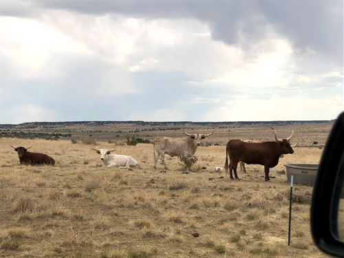 39 Acres In Model, CO : Model : Las Animas County : Colorado