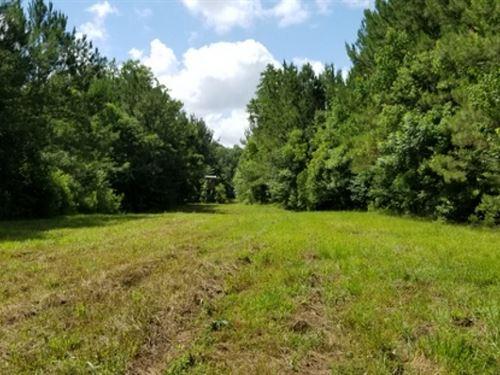 38 Ac - Timberland & Hunting Tr : Jena : La Salle Parish : Louisiana