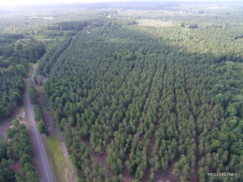 73 Ac - Pine Plantation With Home : Dodson : Winn Parish : Louisiana