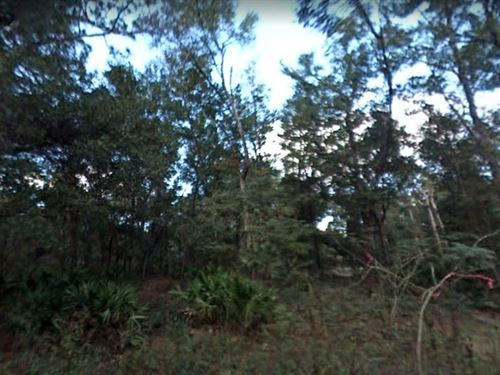 Marion County, Fl $4,000 Neg : Belleview : Marion County : Florida
