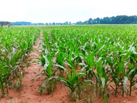 Land Auction In Indiana : Delphi : Carroll County : Indiana