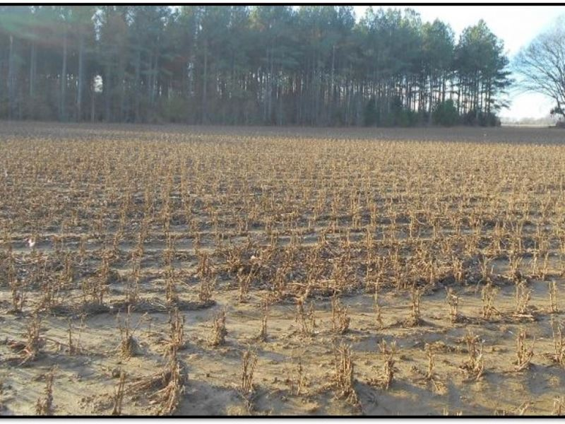 110 Acres In Montgomery County : Kilmichael : Montgomery County : Mississippi