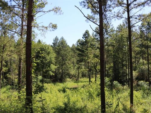 53 Acres In Marion County : Columbia : Marion County : Mississippi