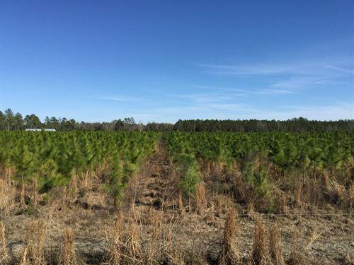 40 Acres In North Central Florida : Mc Alpin : Suwannee County : Florida