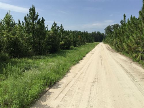 158 Ac In North Central Florida : Wellborn : Suwannee County : Florida