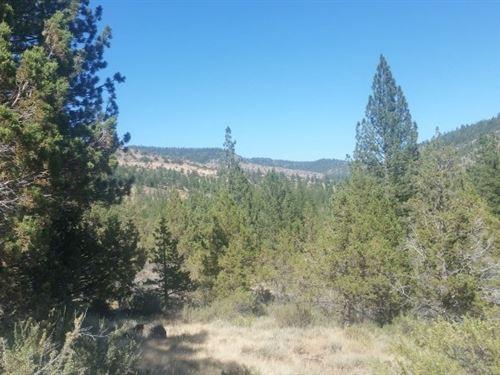 40 Acres Modoc National Forest : Adin : Lassen County : California