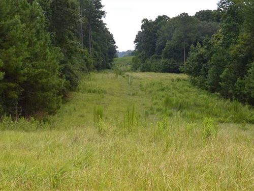 84 Acres of Excellent Hunting : D'lo : Simpson County : Mississippi