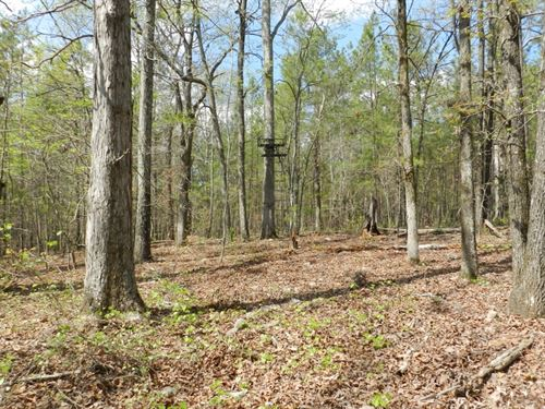 105 Ac Timberland -$1750/Ac : Eatonton : Putnam County : Georgia