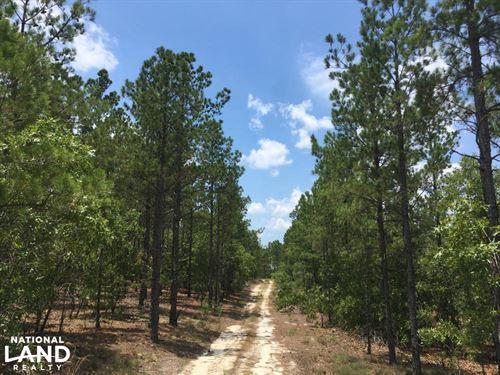 Carolina Wildlife Refuge Timber Tra : Chesterfield : South Carolina