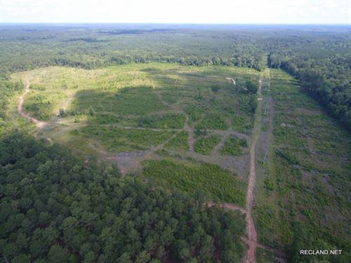 100 Ac - Clear Cut Timberland : Hemphill : Sabine County : Texas