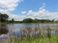 White Ranch : Montgomery : Montgomery County : Texas