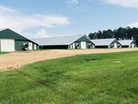 4 House Broiler Farm : Shubuta : Clarke County : Mississippi