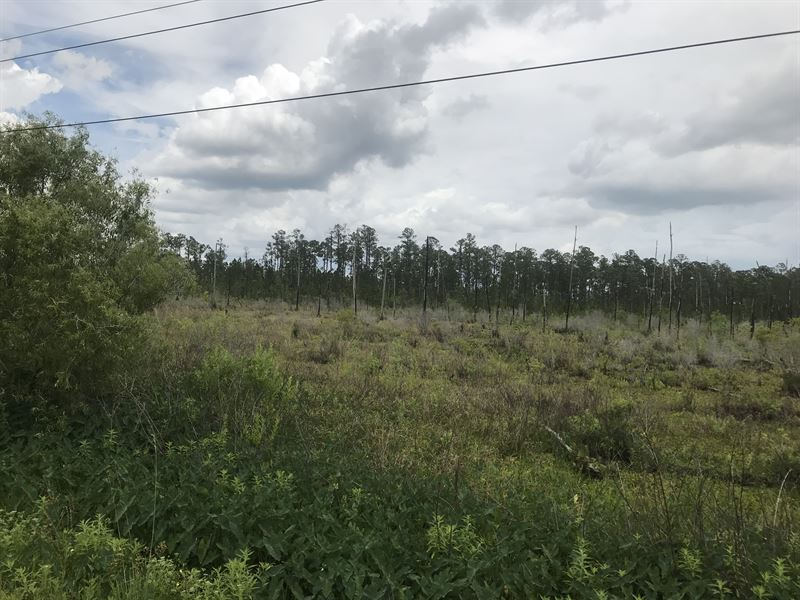 Owner Financing - One Mile From I-4 : Land for Sale by Owner : Polk City :  Polk County : Florida