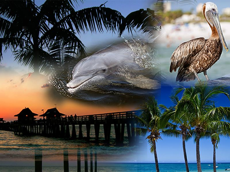 83 Beautiful Home Sites : Cape Coral : Lee County : Florida